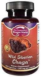 Wild Siberian Chaga